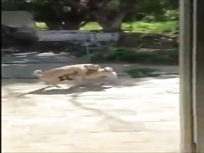 Dog blowjob